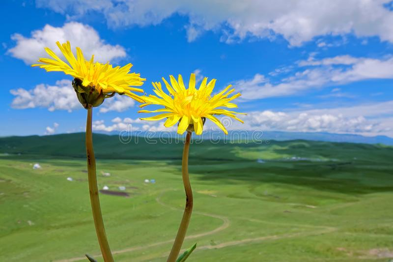 Alpine grassland royalty free stock image