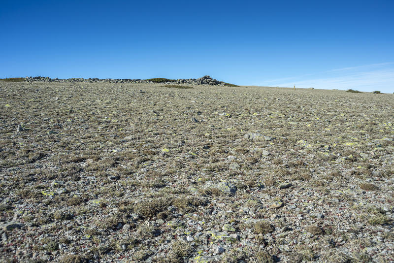 Alpine grasslands of Fescue. Festuca indigesta located between the Pico del Nevero Snowfield Peak; 2.209 metres and Navafria Mountain Pass 1.774 m, in stock photography