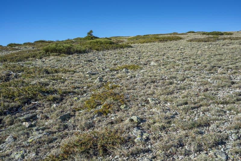 Alpine grasslands of Fescue. Festuca indigesta and Padded brushwood Cytisus oromediterraneus and Juniperus communis located between the Pico del Nevero stock photography