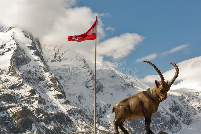 Alpine ibex statue on mountain at Grossglockner area in Austria. stock images