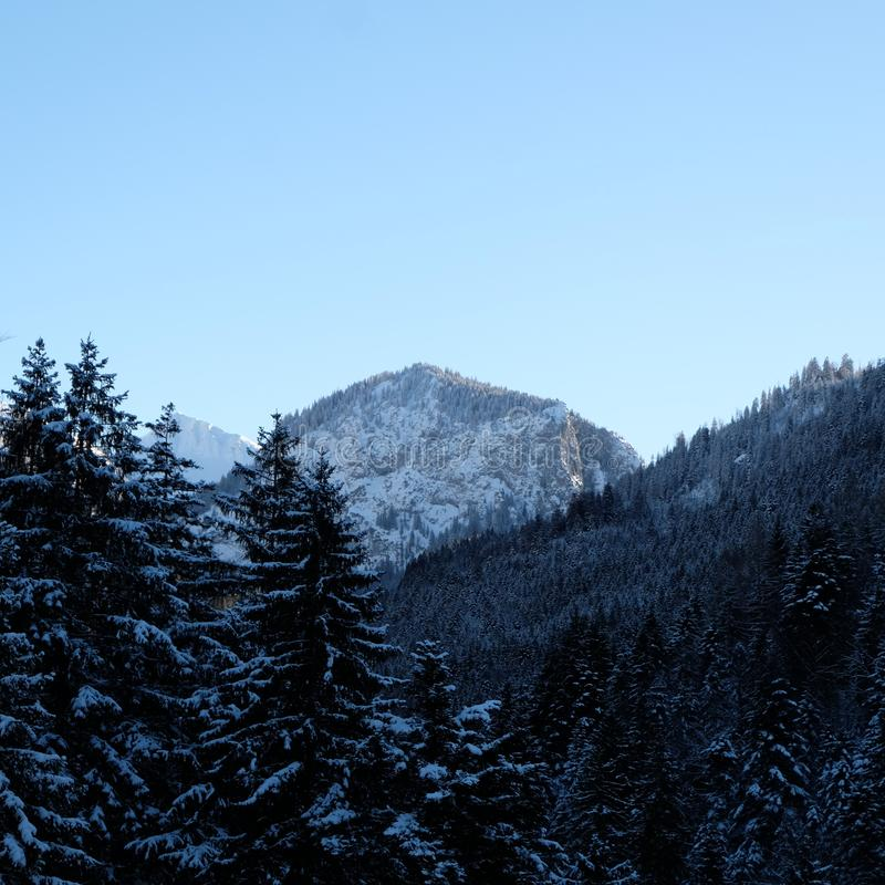 Alpine Kiefer Forest Valley Snowy stockbild
