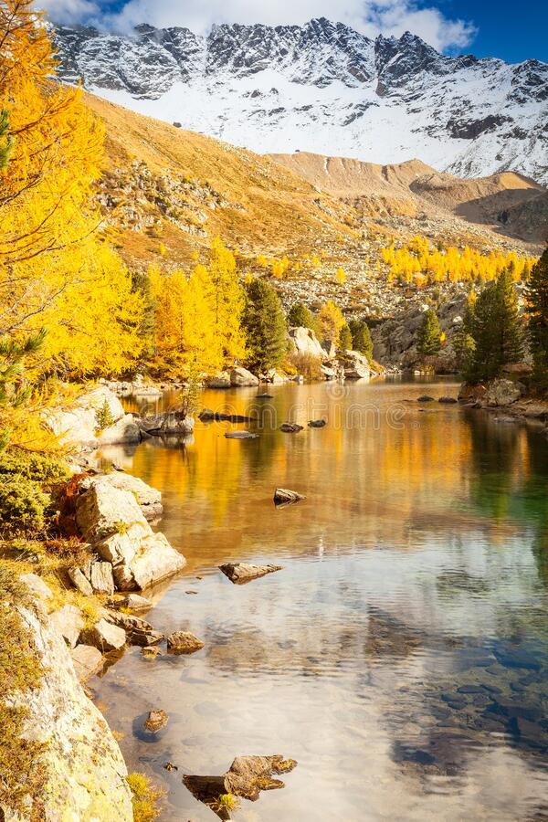 Alpine lake with larches. In the fall stock photos