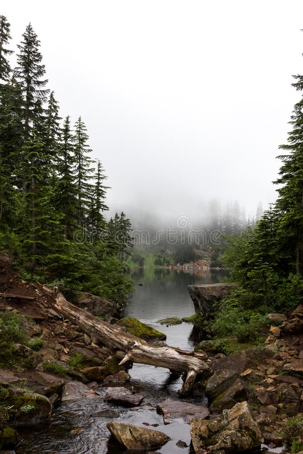 Alpine Lake Surrounded by Fog and Conifer Trees. Fog rolling in over an alpine lake with stream and downed log in the forest stock photo