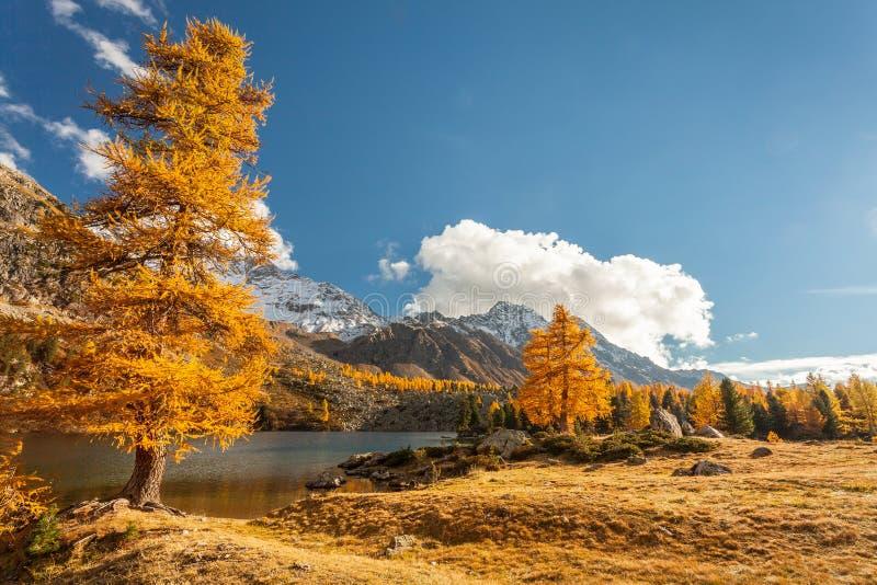 Alpine lake - Val di Campo CH. Alpine lake - autumn - Val di Campo CH stock image
