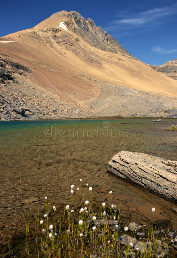 Download Alpine Lake And White Flowers Stock Image - Image: 21803843