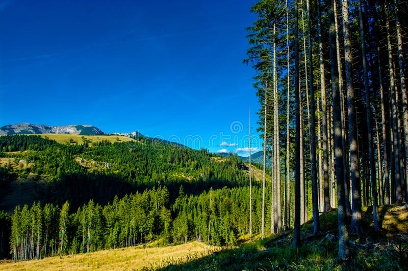 Alpine Landscape with Mountains and Forests in Austria stock photos