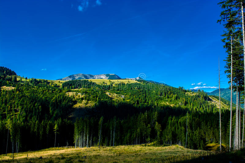 Alpine Landscape with Mountains and Forests in Austria stock images