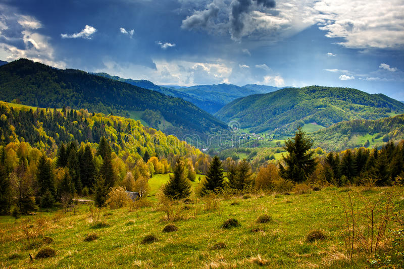 Download Alpine Landscape With Pine Forests Stock Photo - Image: 41072028