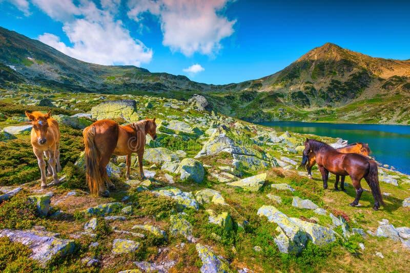 Alpine Landschaft des malerischen Sommers mit dem Weiden lassen von Pferden, Retezat-Berge, Rumänien lizenzfreies stockfoto