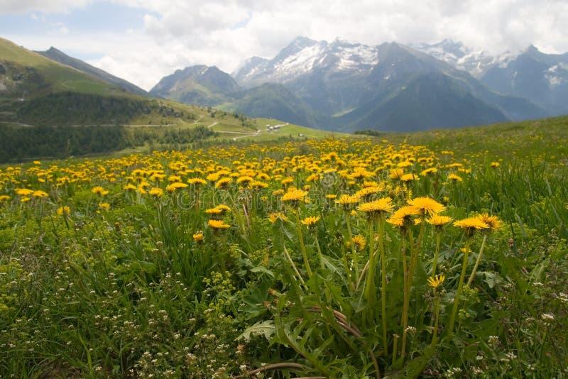 Alpine meadow royalty free stock image