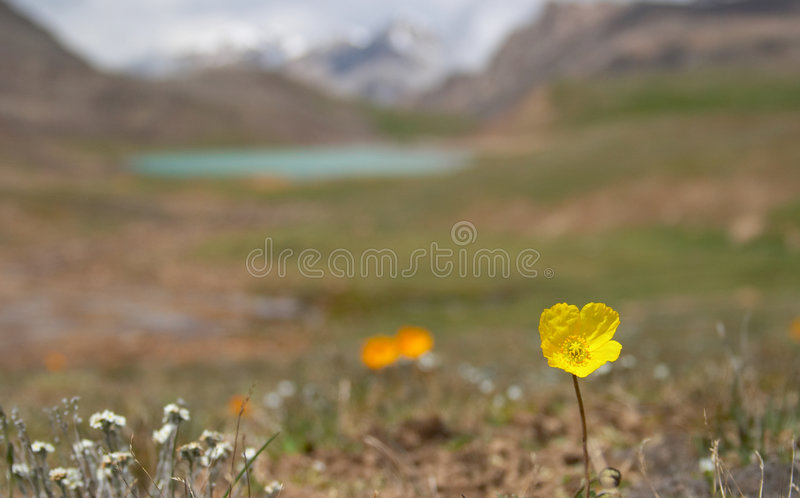Alpine meadow 4. Alpine meadow in the morning 4 stock image