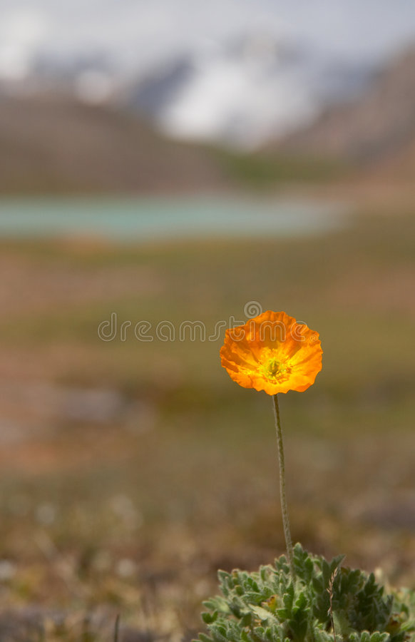 Alpine meadow in the morning 3. Alpine meadow 3 stock photography