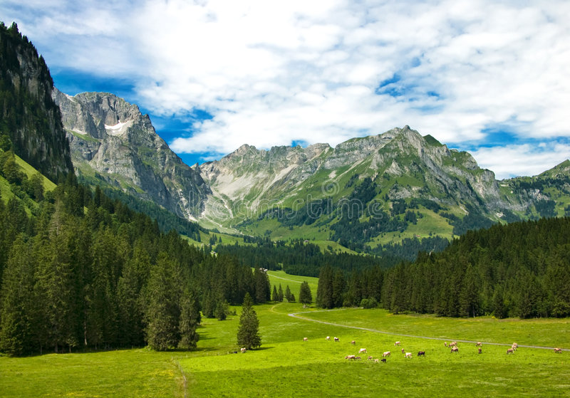 Alpine meadow in Switzerland stock photography