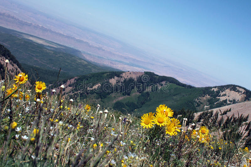 Alpine meadow with wildflowers stock photography