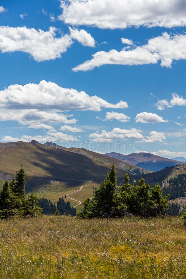 Wandering the meadows of Shrine Mountain, Colorado on windy day. Alpine meadows in the foreground of this image are bent by strong winds while fluffy white royalty free stock photos