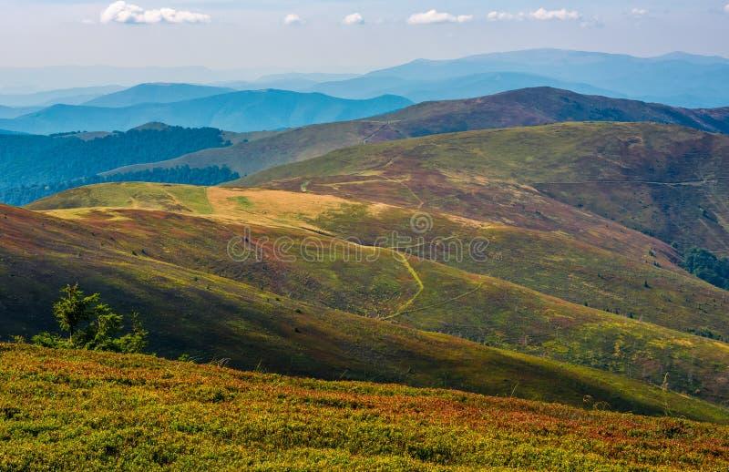 Alpine meadows over the flat mountain ridge stock images