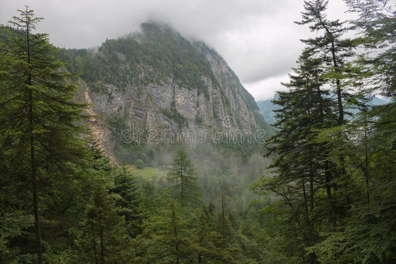 Alpine mountains and wall of deep green forest. Walk in summer day in town Hallstatt, Austria royalty free stock image