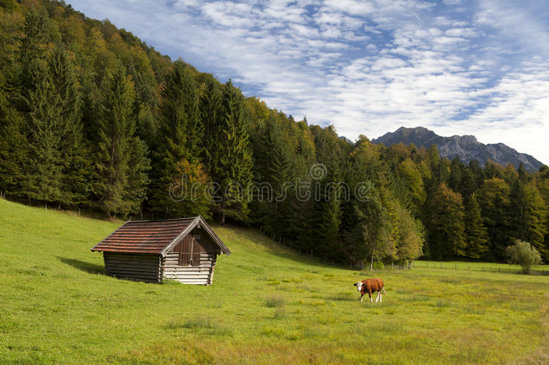 Download Alpine pasture in Bavaria stock photo. Image of meadow - 26830612