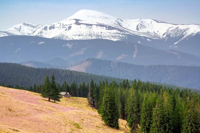 Alpine pasture in the Carpathian mountains against the backdrop of a snow-covered ridge and the highest peak Goverla.  stock image