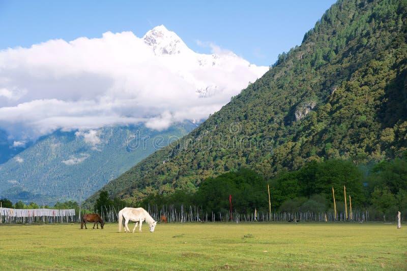 Alpine pasture royalty free stock image