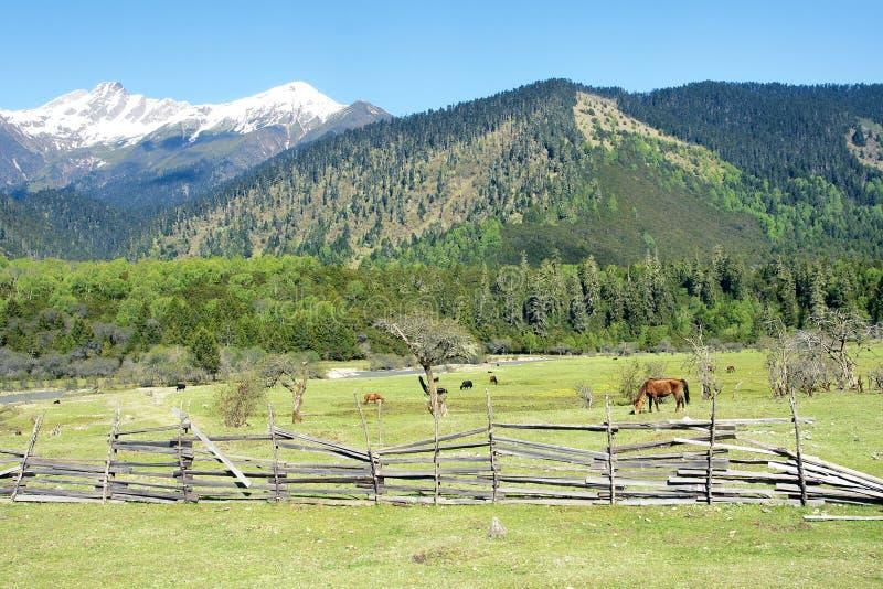 Alpine pasture stock images