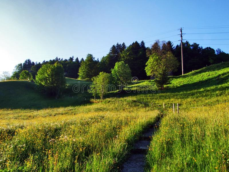 Alpine pastures and meadows on the slopes of Churfirsten mountain range royalty free stock images