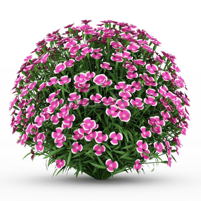 Alpine rosafarbene Blumen getrennt auf Weiß lizenzfreie abbildung