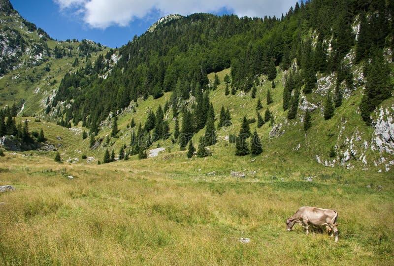 Alpine scenery royalty free stock images