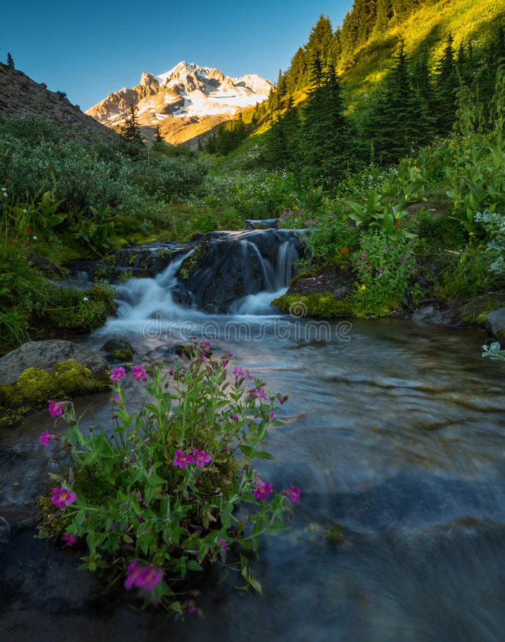 Alpine stream from Mt. Hood stock photos
