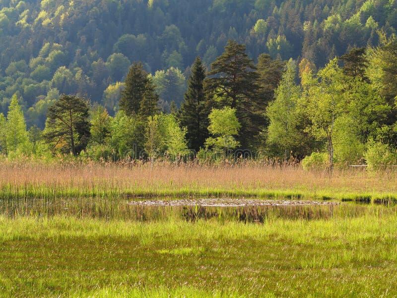 Alpine Sumpfgebietlandschaft lizenzfreies stockbild