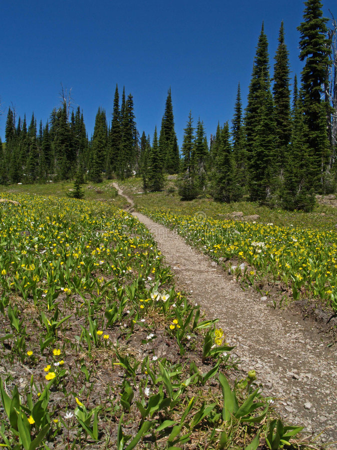 Download The Alpine Trail stock photo. Image of alpine, pebbles - 2933504