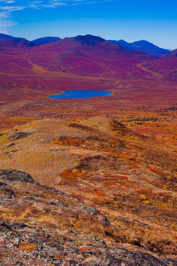 Alpine tundra. Fall-colored alpine tundra, Yukon Territory, Canada royalty free stock photography