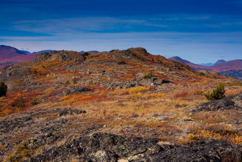 Alpine tundra. Fall-colored alpine tundra, Yukon Territory, Canada royalty free stock image