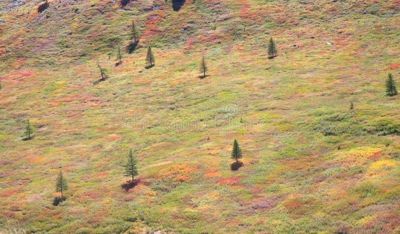 Alpine Tundra stockfoto