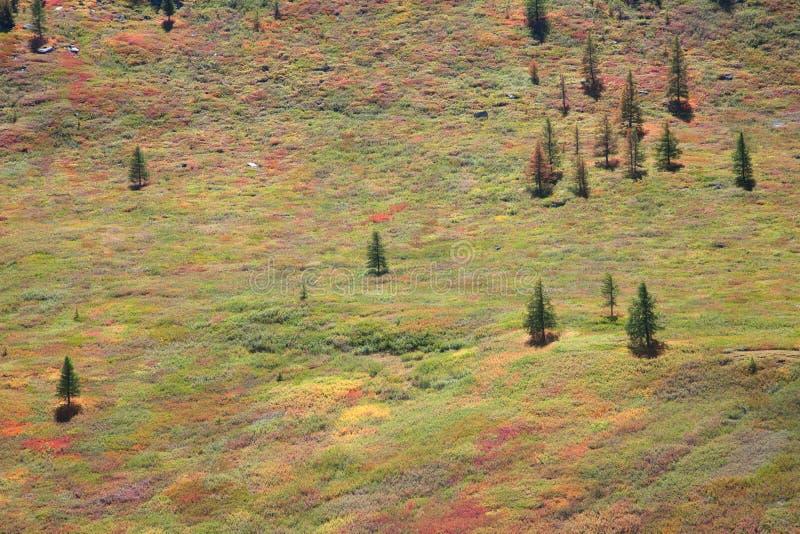 Alpine Tundra lizenzfreie stockfotografie