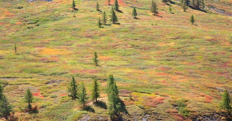 Alpine Tundra lizenzfreie stockfotos