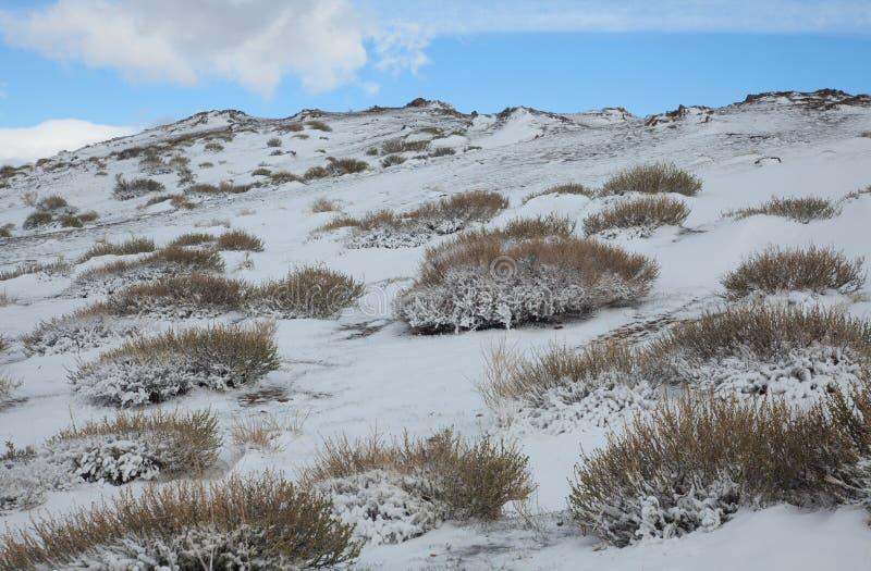 Alpine Tundra stockbild