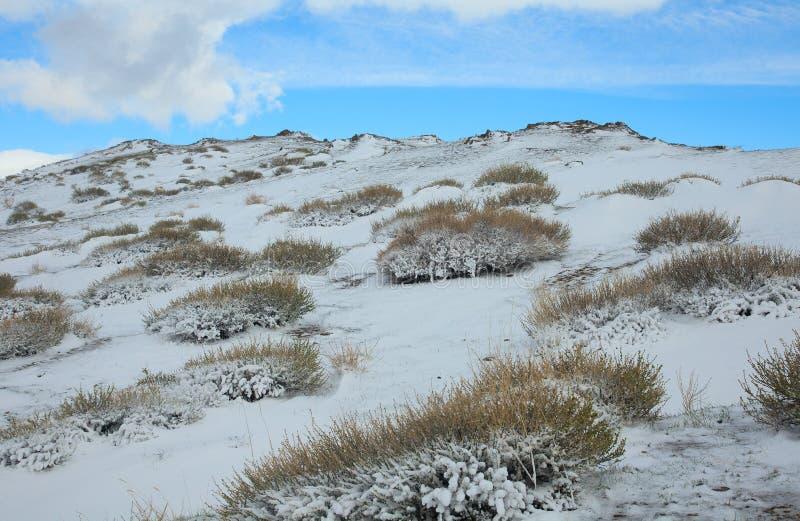 Alpine Tundra lizenzfreies stockfoto