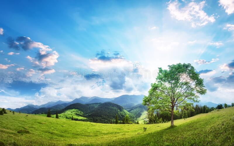 Alpine valley with lone tree beautiful panorama. Fresh air of highland royalty free stock photos