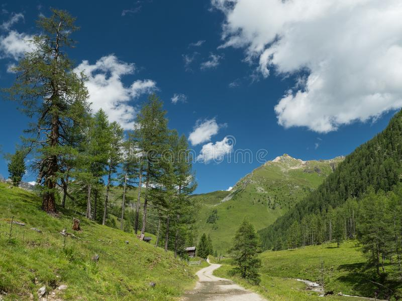 Alpine valley with trees, dirt road and pastures royalty free stock images