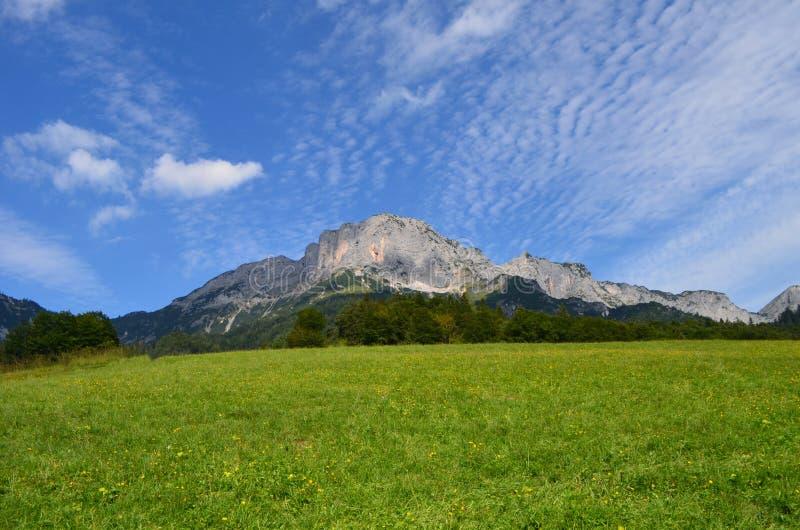 Alpine Wiese stockfotografie