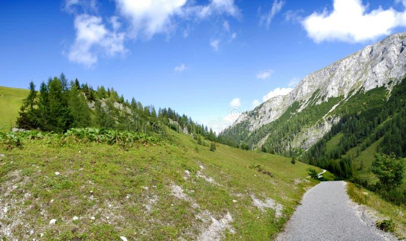 Alpine Wiese und Straße stockbild