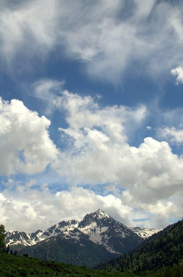 Alpine Wiesen lizenzfreie stockfotografie