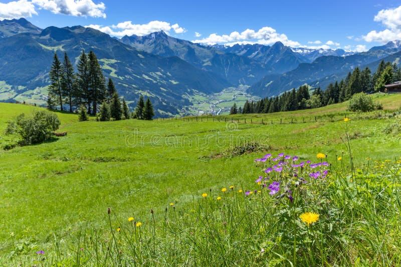 Alpiner Bergblick mit hellgrüner Wiese im Vordergrund Österreich, Tirol, Zillertal, hohe alpine Straße Zillertal stockfotos