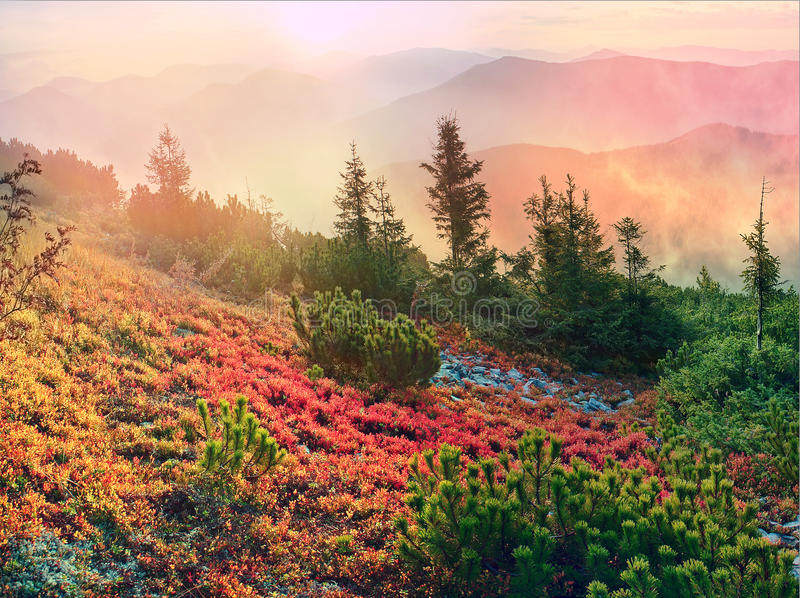 Alpiner Herbst in Gorgany lizenzfreie stockbilder