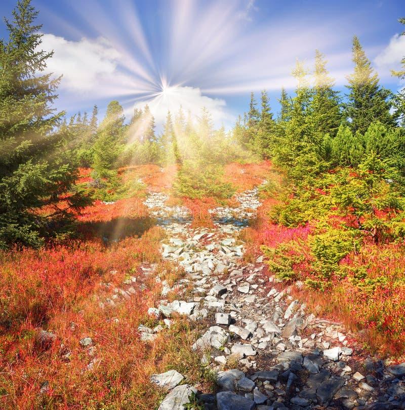Alpiner Herbst in Gorgany stockbilder