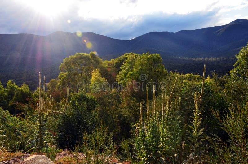 Alpines Gebirgsvorwaldland bei Tidbinbilla, Australien stockfoto