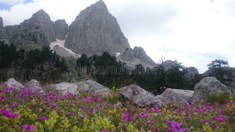 Alpinisty Eagle i alpinista zdjęcie royalty free