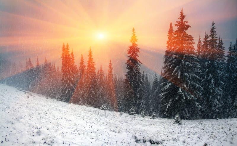 Alpino è il clima immagine stock