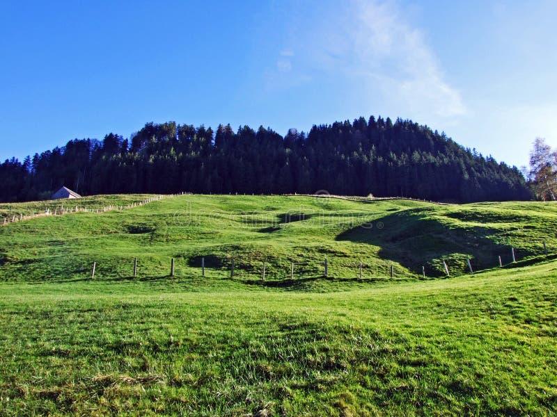Alpint betar och ängar i den Apenzellerland regionen och på lutningarna av den Alpstein bergskedjan royaltyfria foton